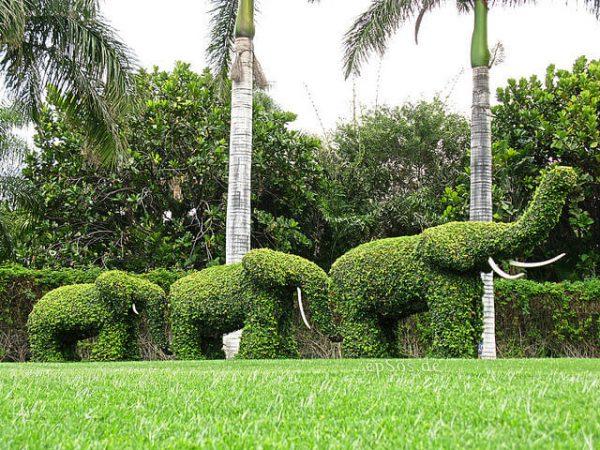 تنسيق حدائق الملز الرياض